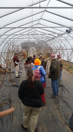 Walking students through our high-tunnel organic peach growing experiment