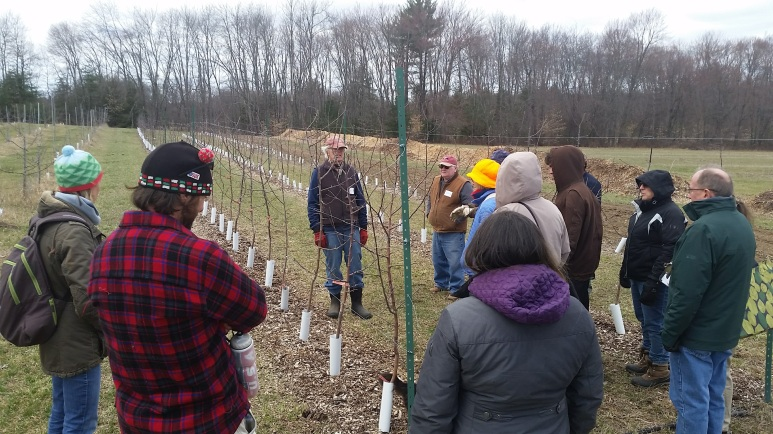 Showing our students different post-graft stages: 1st leaf ---> 5th leaf, in the context of a tall spindle orchard.