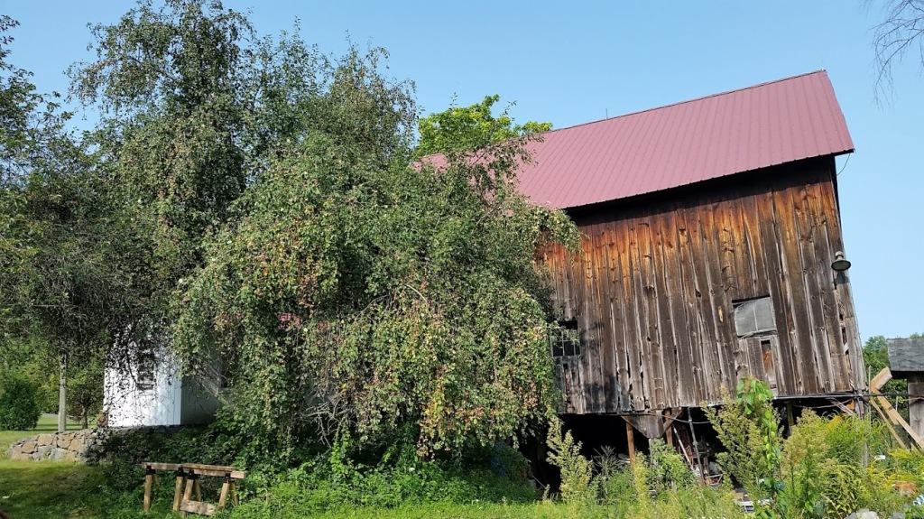 tanenbaum apple